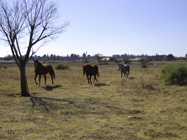 Some of the Namibia-to-Potchefstroom brood.